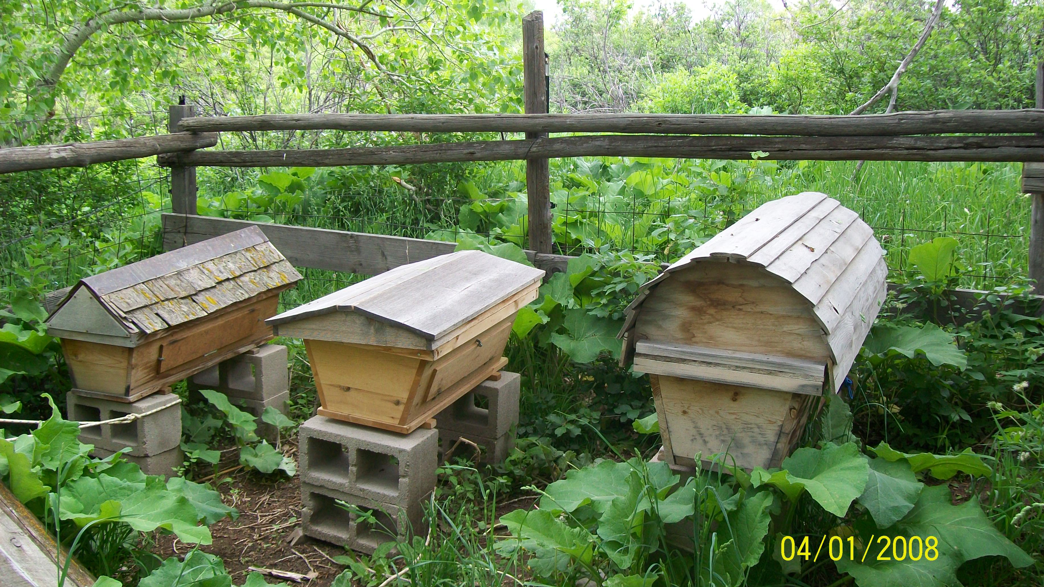 Ordinaire There Are 8 Hives ...