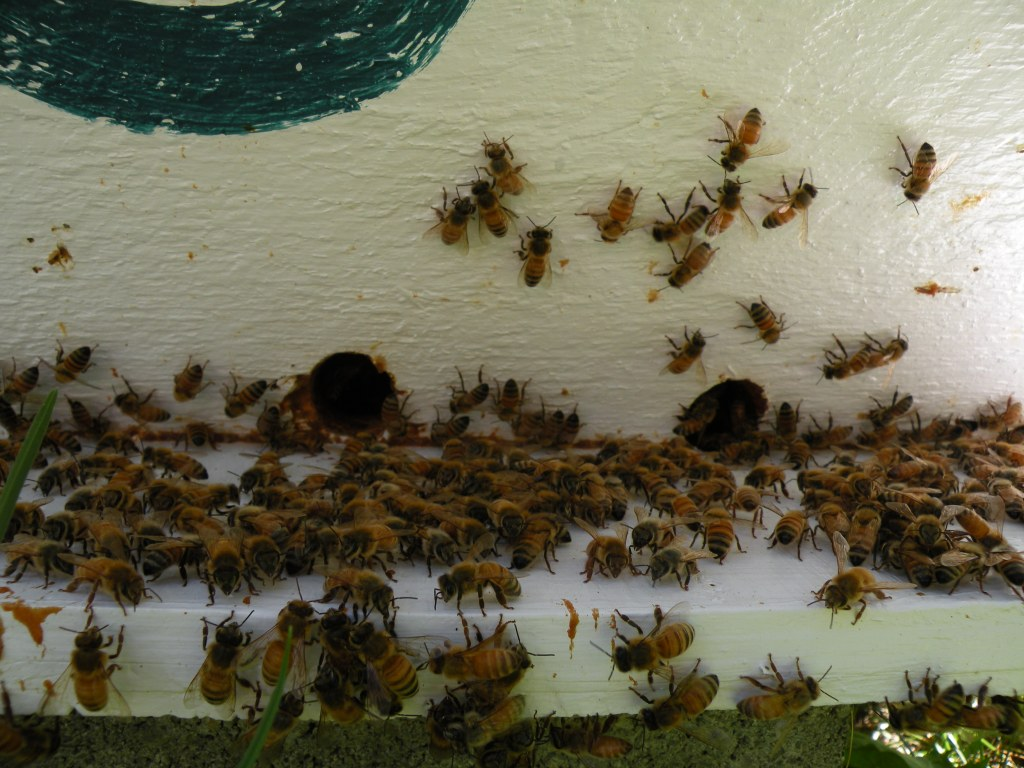 A.B.C Goes to 2011 Natural Beekeeping Conference: Leominster, Mass.