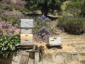 Hives in Studio City