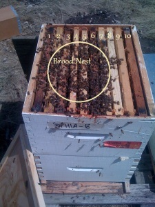 Dandelion Flow and Your Bees- #2 Bee Production