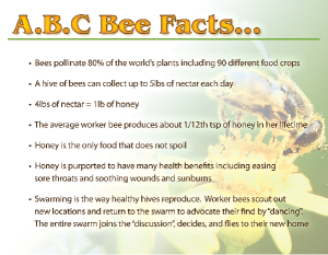BeeFacts-1