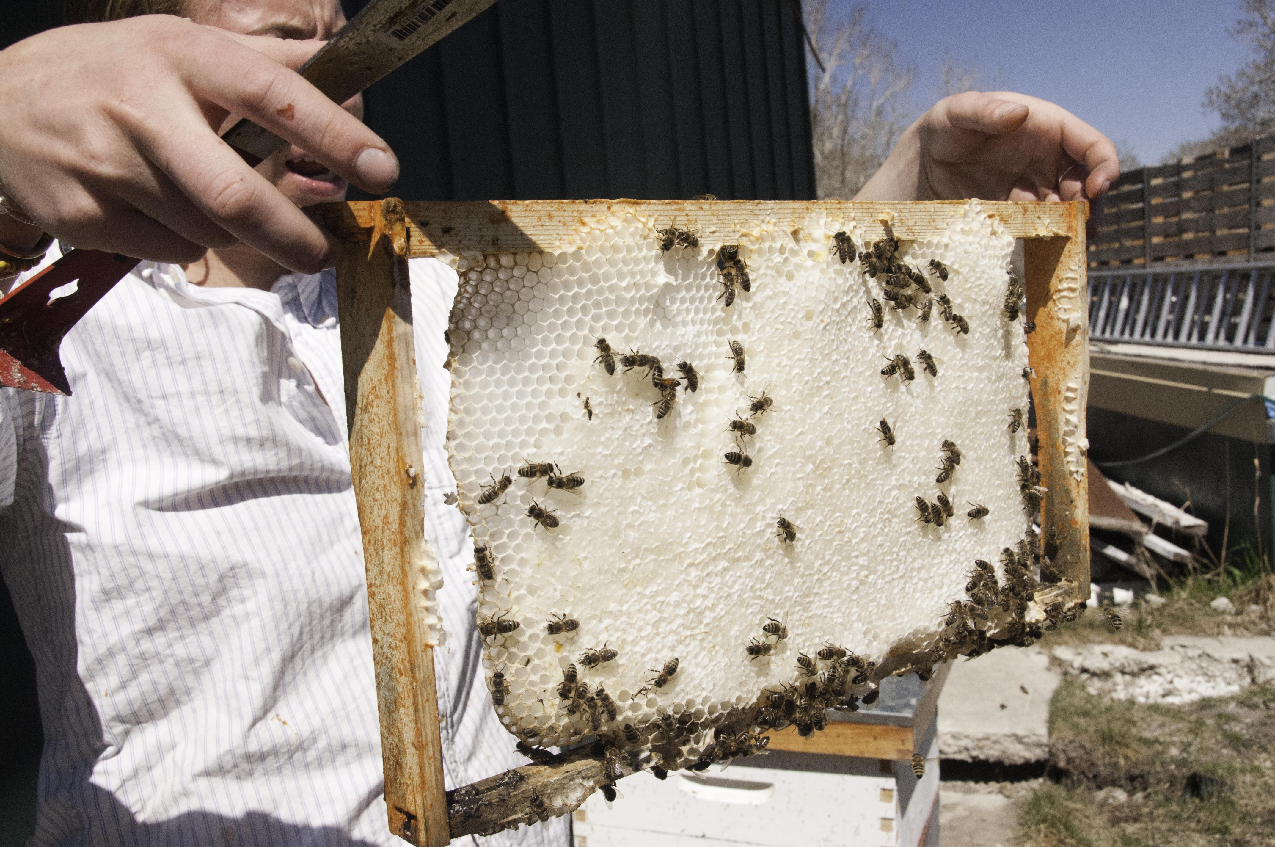 feeders bemis honey farm hive bee feeder wooden top image products