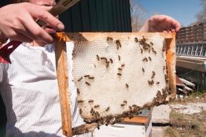 Palliser Hive Check4